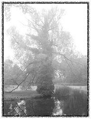 mystischer Baum im Nebel