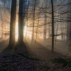 *Mystischer Herbstwald*