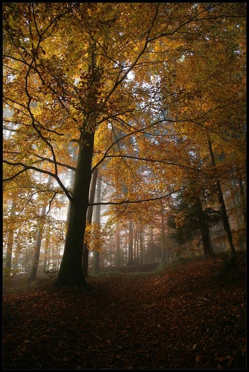 Mystischer Nebelwald 2007/2