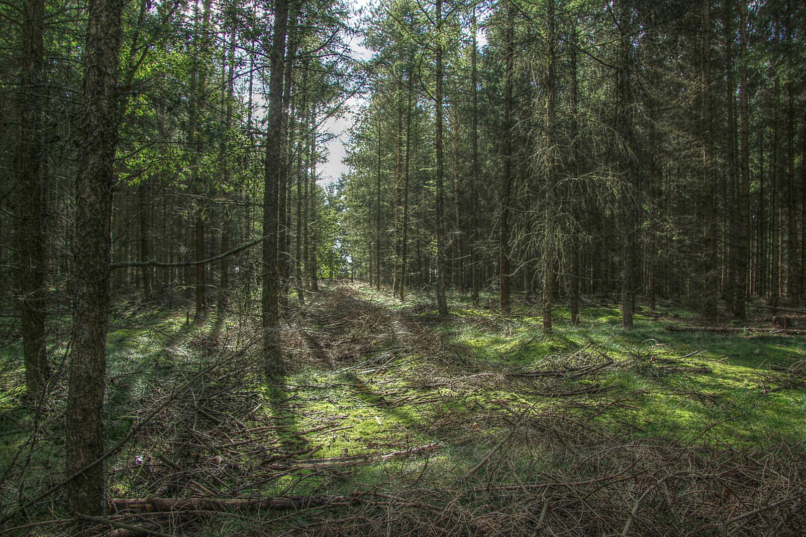 Mystischer Wald..