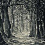 Mystischer Wald (Variante B)