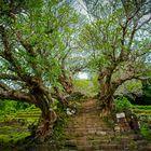 Mystisches Laos...