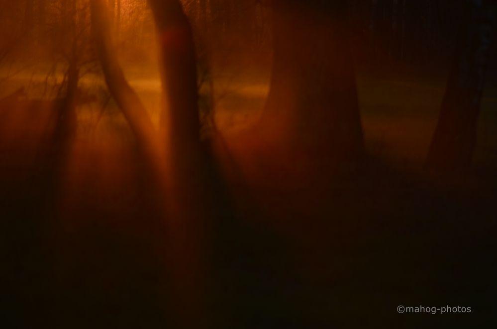 Mystisches Licht...