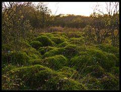 mystisches Moor