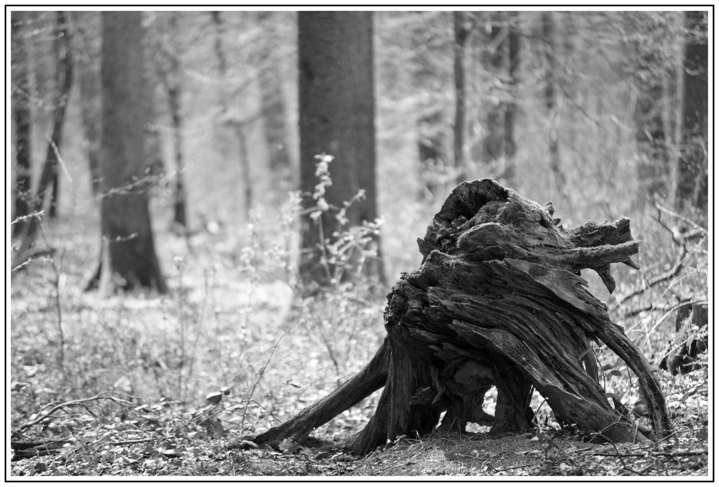 mystisches Waldwesen