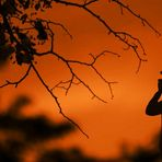 My...sunset