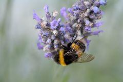 na der Honig wird duften...