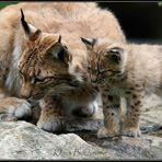 Na Mama, schnappen wir uns die Maus ?
