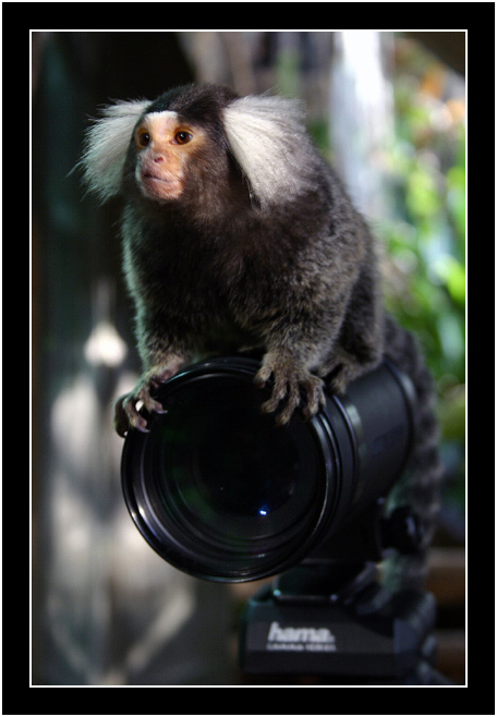 Na, wer is hier der Fotograf?
