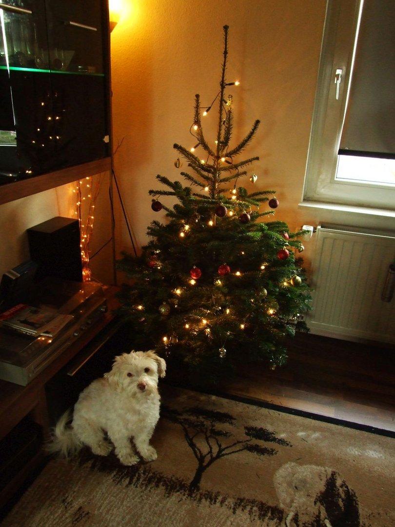 na wo ist denn der weihnachtsmann foto bild. Black Bedroom Furniture Sets. Home Design Ideas