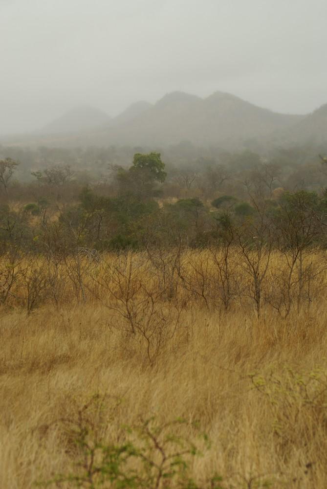 Nach dem ersten Regen seit langem in Afrika