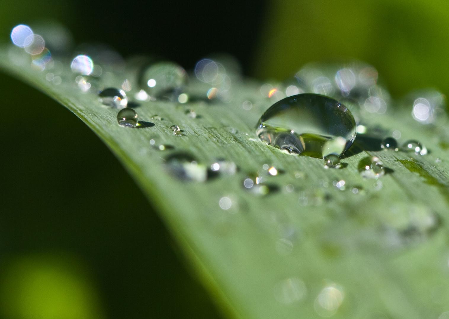 ... nach dem Regen