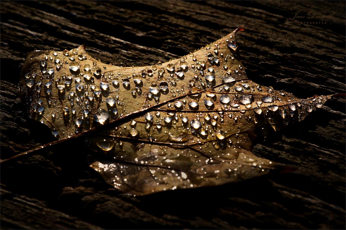 Nach dem Regen (1)