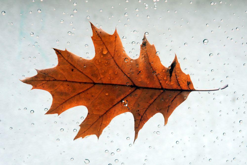 .. nach dem Regen ...
