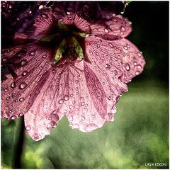 Nach dem Regen... I