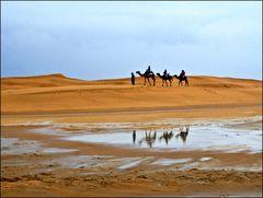 Nach dem Regen in der Wüste