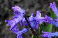 Nach dem Regen kommt der Frühling