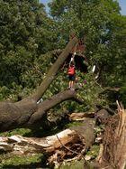 Nach dem Sturm vom 09.06.2014