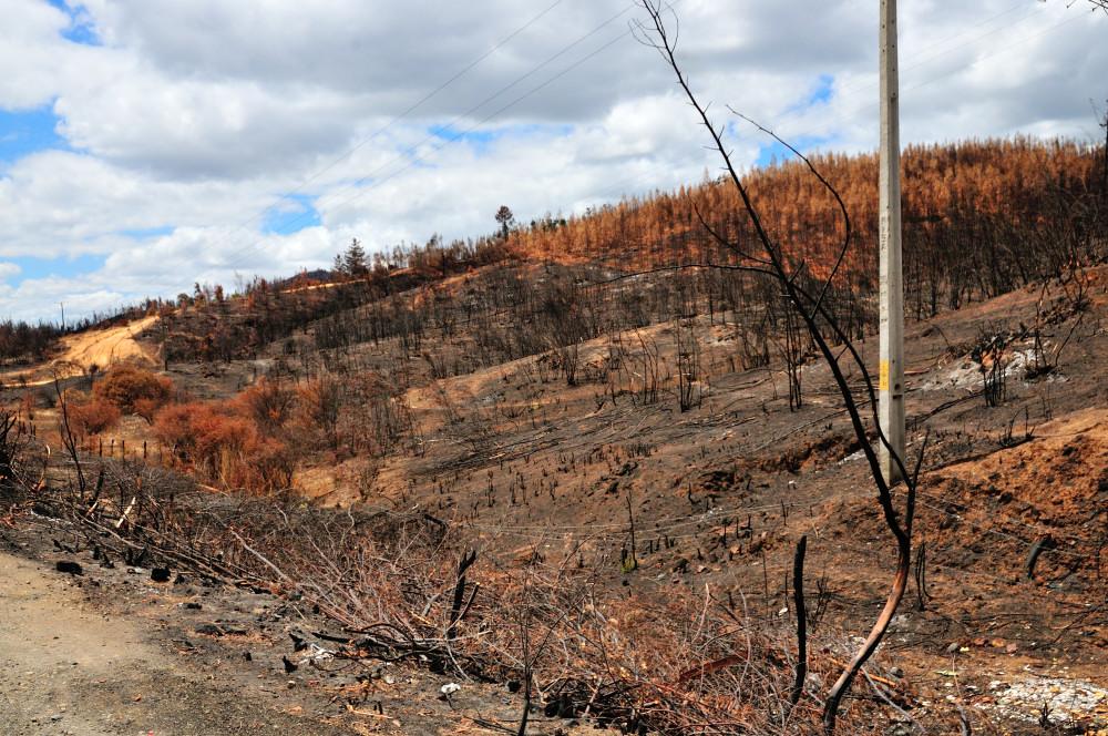 Nach dem Waldbrand_03