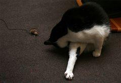 Nach der anstrengenden Mäusejagd ist Katzenwäsche Pflicht! :)