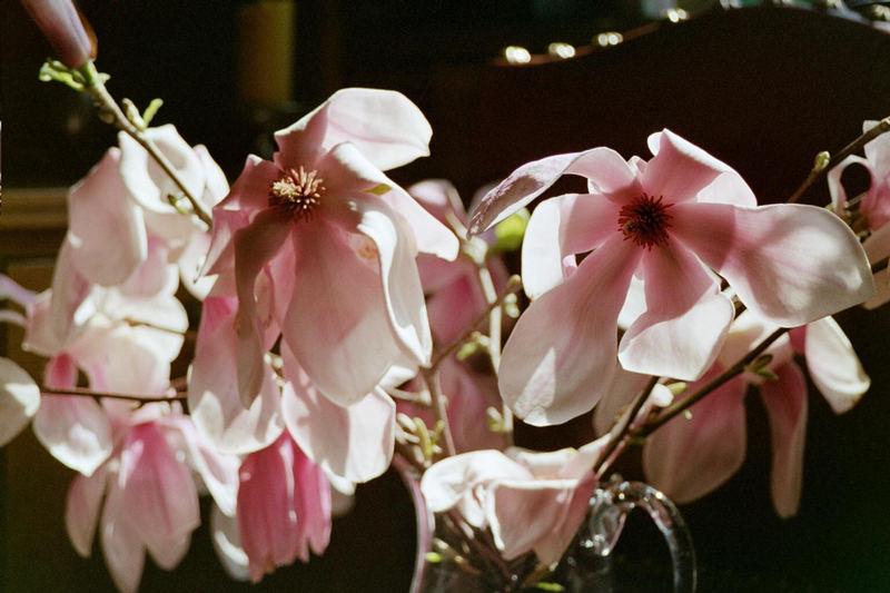 Nach einem Frost Frühjahr 2002