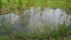 nach einem Regen (MW 2008.04.23.)