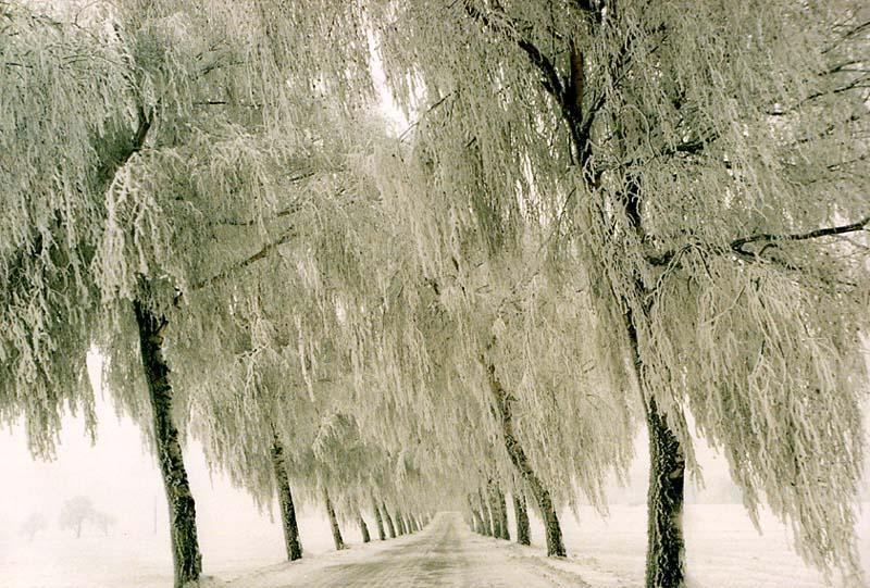 nach einem Wintersturm