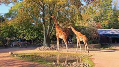 """Nach fast 10 Jahren war ich wieder mal in meiner alten """"Arbeitsstelle"""" dem Dresdner Zoo..."""