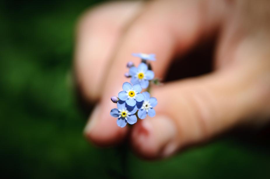 Nach immerhin nur 30 Jahren bekomme ich nun zum ersten Mal von meiner Frau einen Strauß Blumen