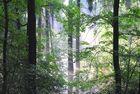 nach tagelangem Regen-erste Sonnenstrahlen im Wald