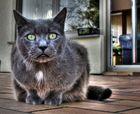 Nachbar Katze.