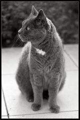 Nachbars Katz