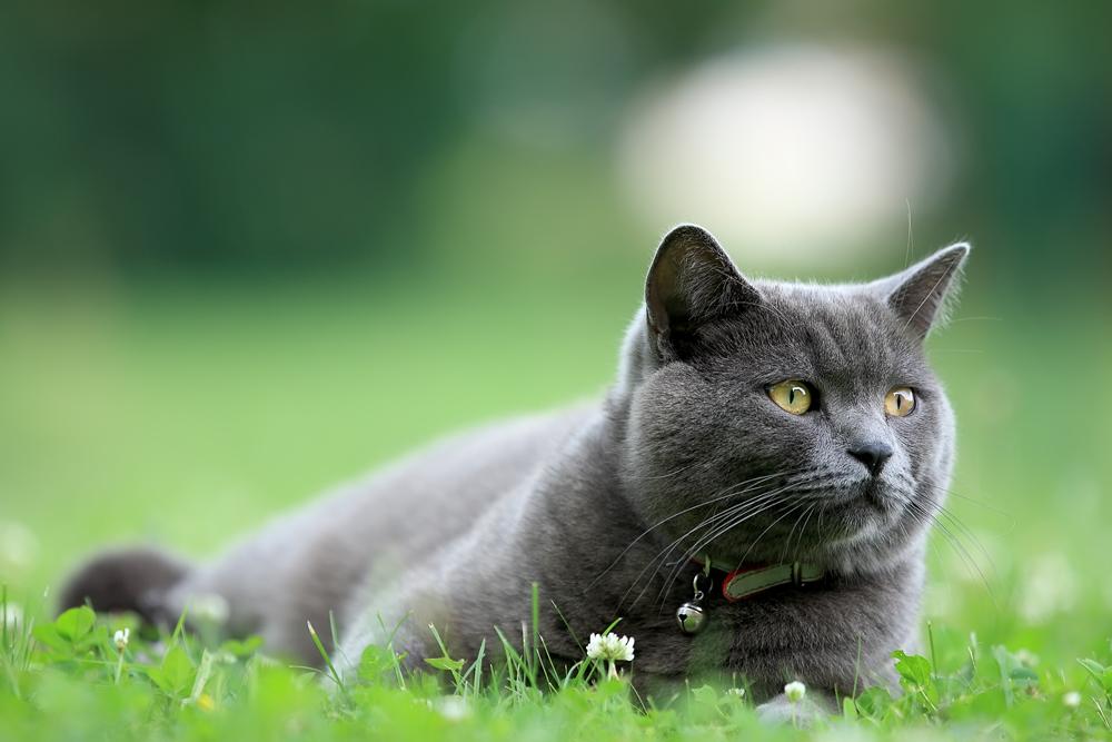 Nachbars Katz...