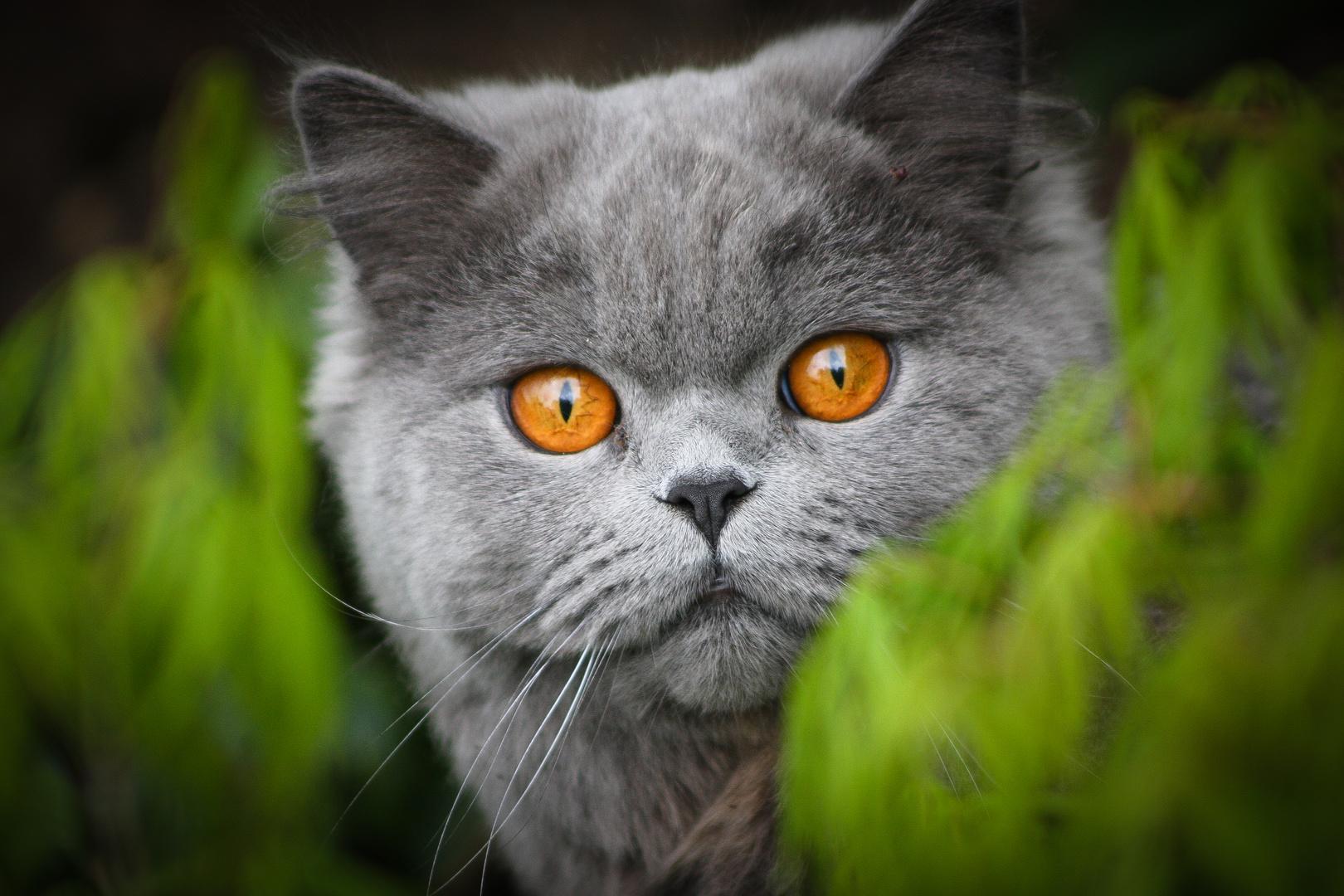 Nachbars Katze 1