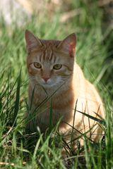"""""""Nachbars Katze 1"""""""