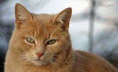 """Nachbars Katze 2 Serien-Ende"""