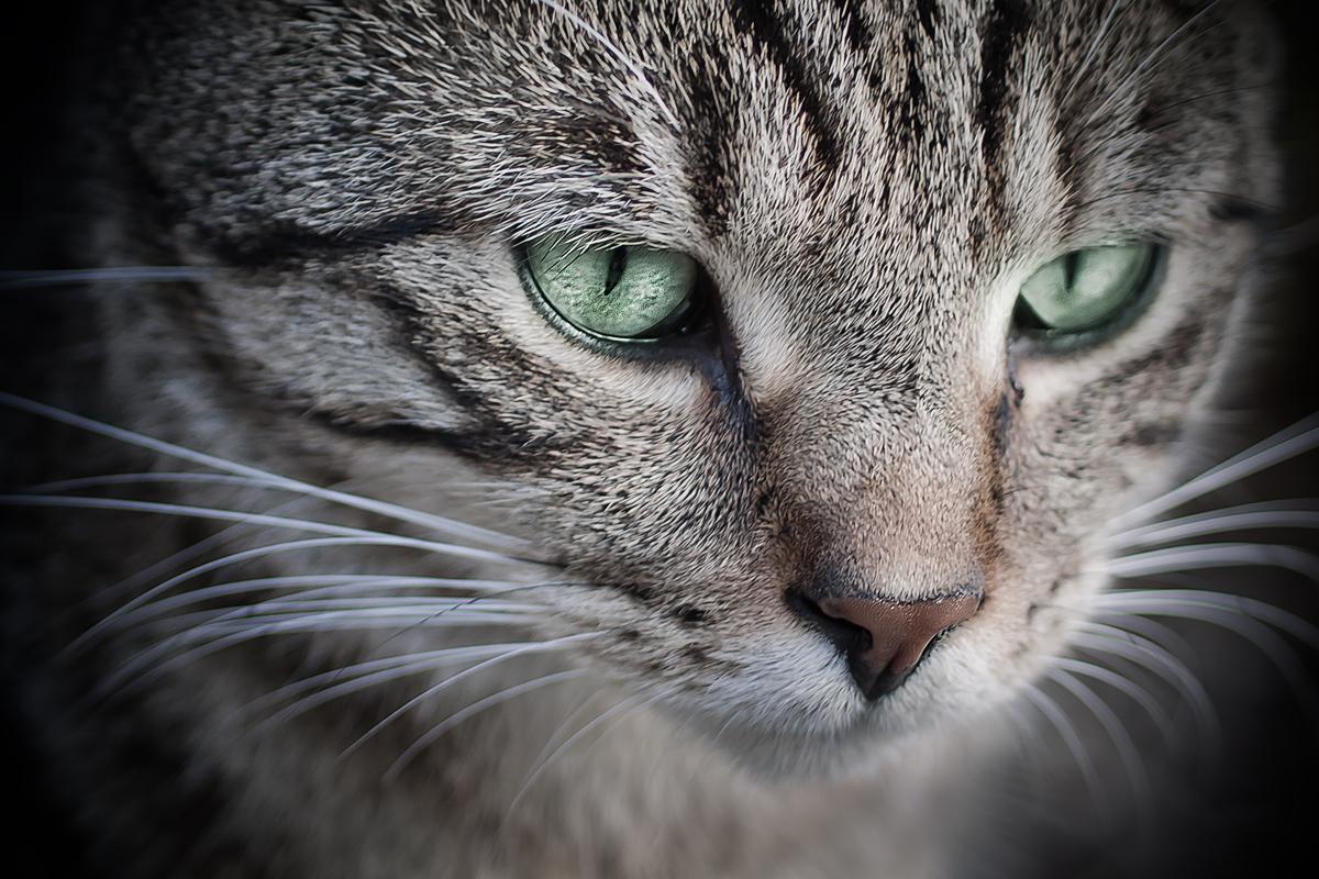 Nachbar's Katze