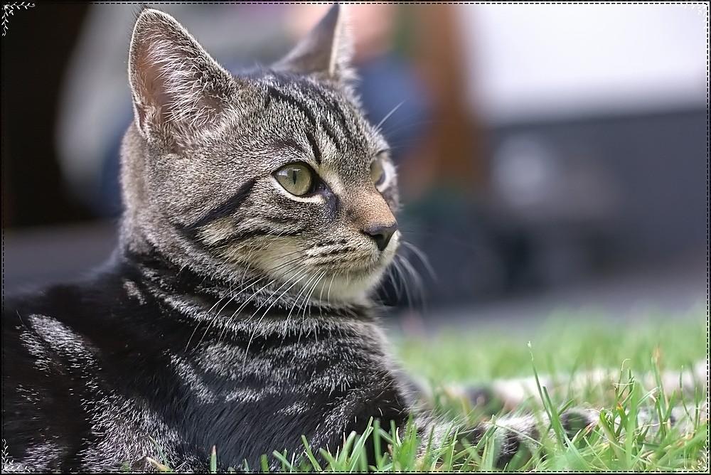 ~Nachbars Katze~