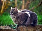 Nachbars Katze (II)