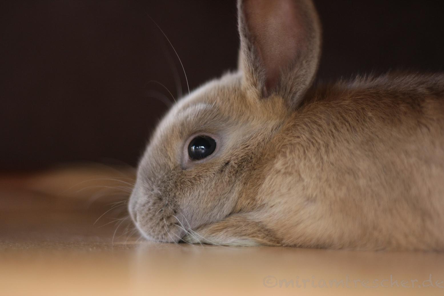 Nachdenkliches Kaninchen