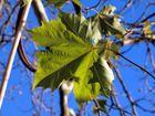 Nachlese zum Herbst