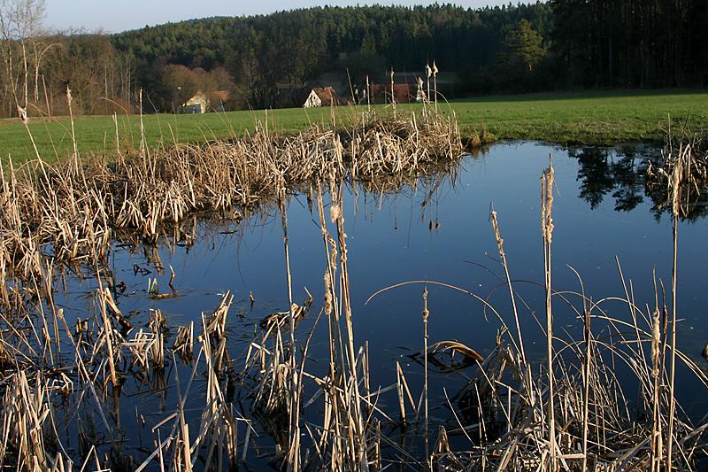Nachmittag am Teich