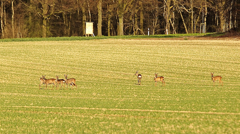 Nachmittags auf dem Feld