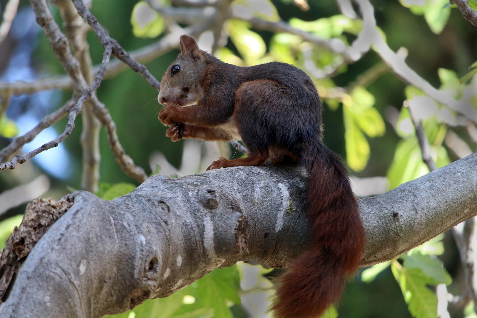 nachmittagssnack in der höhe foto  bild  eichhörnchen