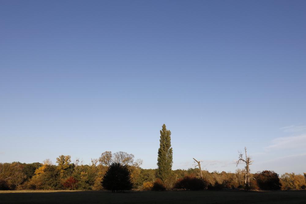 Nachmittagsstimmung in der Muldeaue kurz bevor Sonnenuntergang
