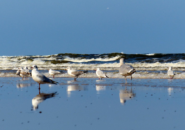 Nachsaison an der Ostsee III.