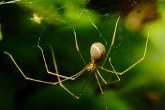 Nachtaktive Spinne