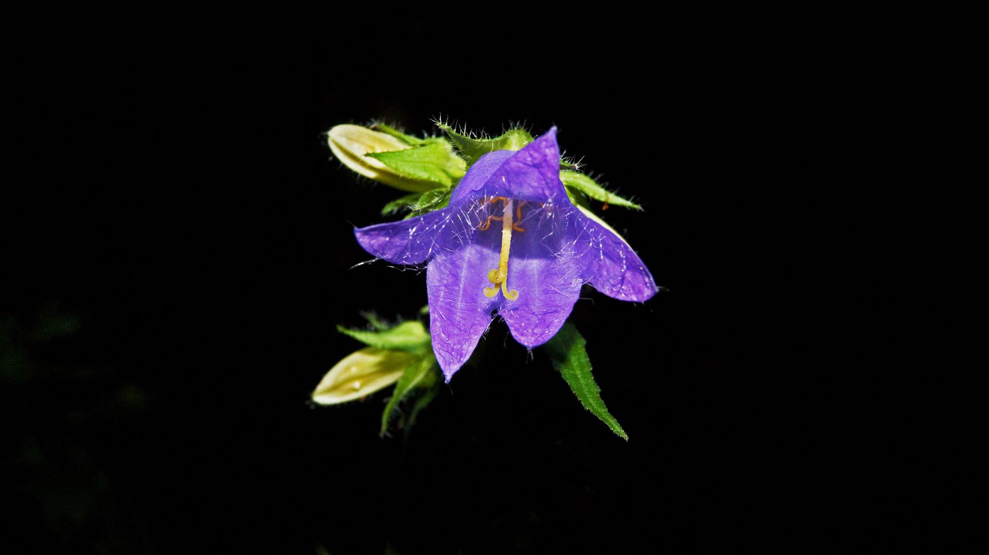 Nachtaufnahme Blume!