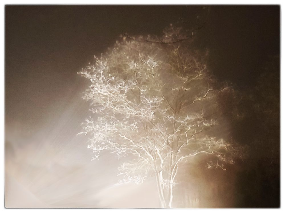 Nachtbaum