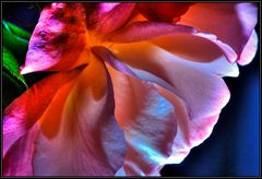 nachtblüte 1